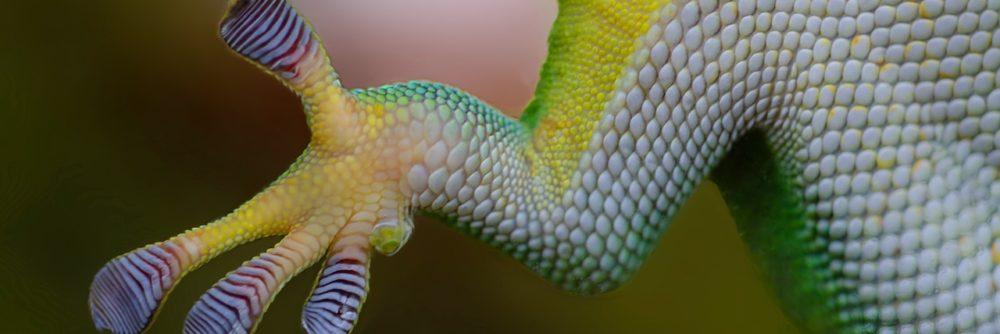 Terrarium Kaufen Gecko Hand