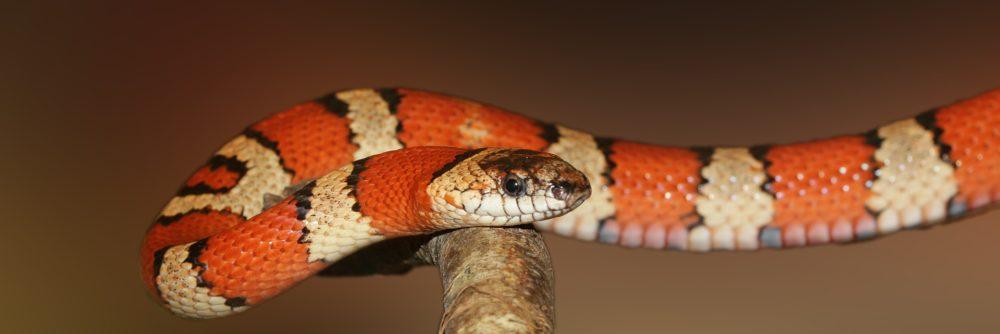Terrarium einer Schlange – Die ideale Größe